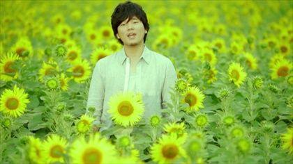 hatamotohiro-sunflowerpromise1